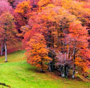 5 Forests to Get Lost in Autumn
