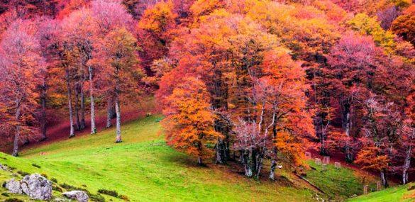 5 bosques para perderse en España