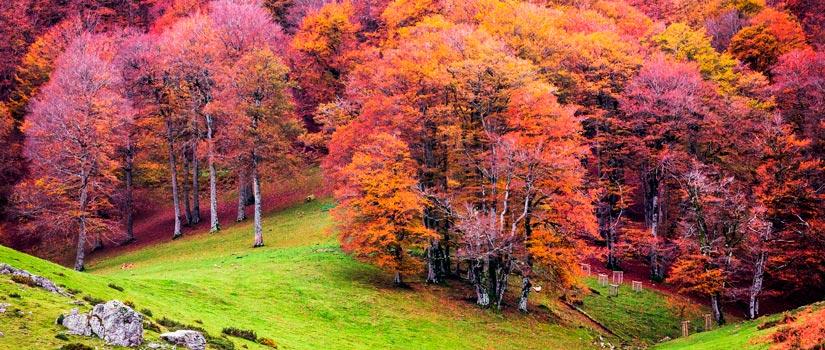5 bosques para perderse en otoño