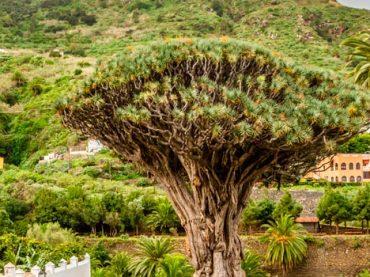 Icod de los Vinos – Tenerife