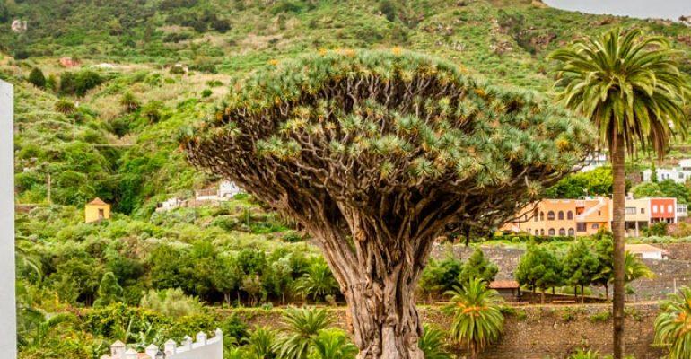 Dónde dormir en ICOD DE LOS VINOS – Tenerife