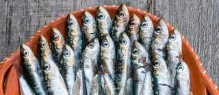 sardinas navia