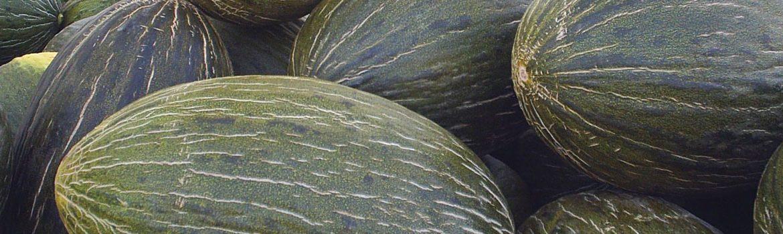 melon de la mancha