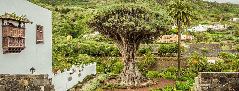 Icod de los Vinos que ver Tenerife