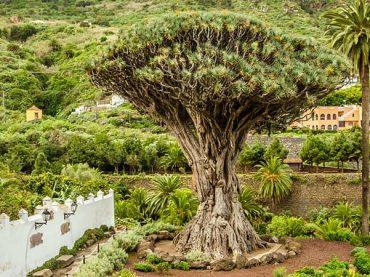 Qué ver en Icod de los Vinos – Tenerife