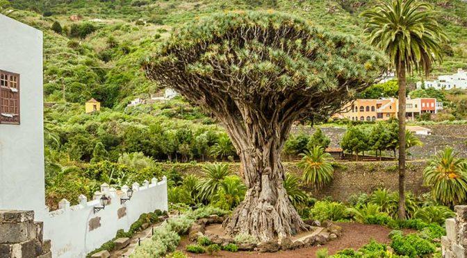 Dormir à Icod de los Vinos - Tenerife