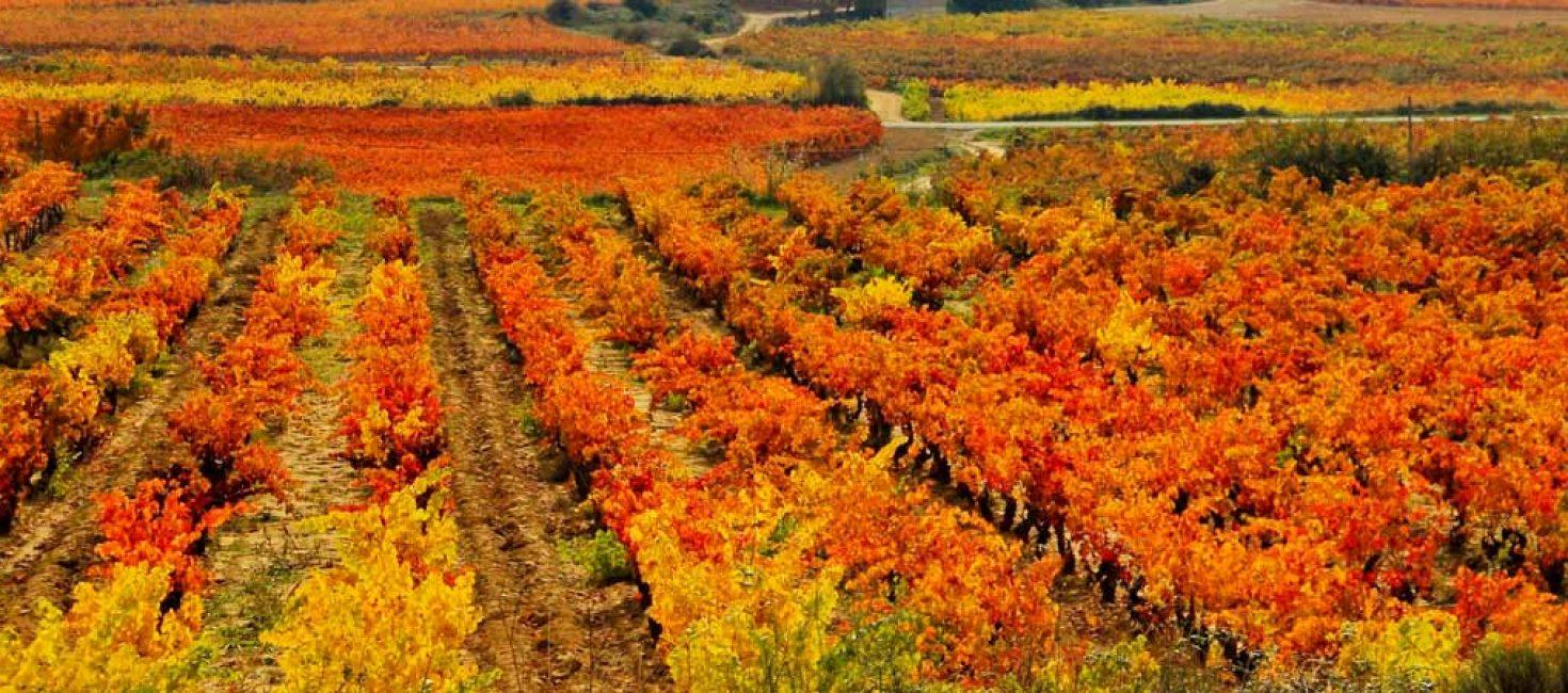 Los mejores planes de turismo en La Rioja