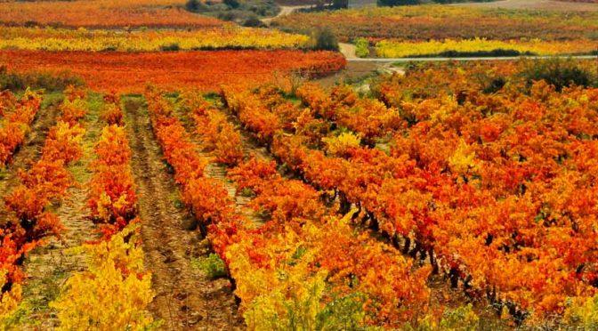 Escapada y que ver en La Rioja