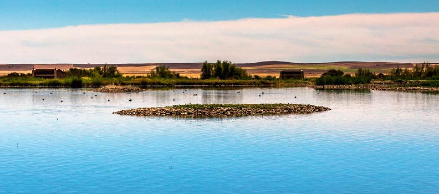 Reserva Natural de las Lagunas de Villafafila