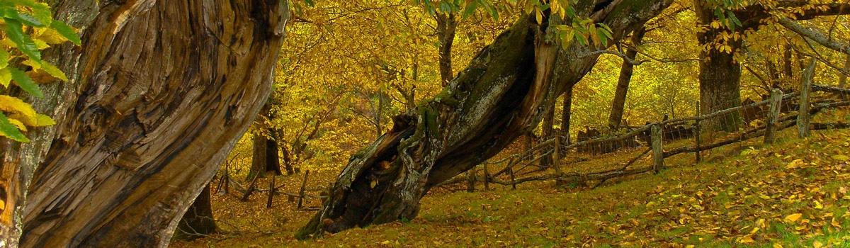 parque natural de la sierra de o courel españa fascinante