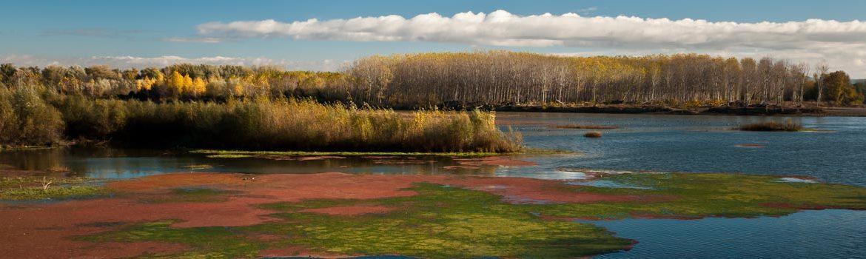 Sotos del Ebro