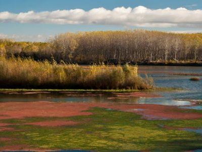 Reserva Natural de los Sotos del Ebro