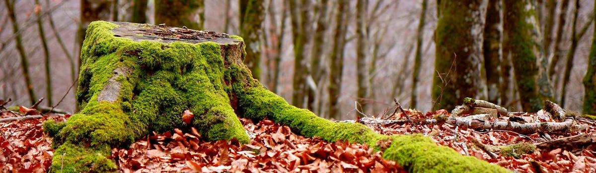 Parque natural del Señorío de Bertiz España Fascinante