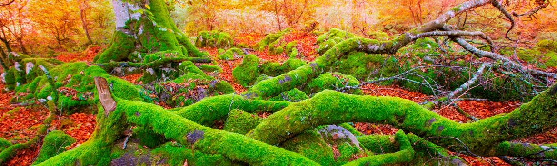 Parque natural de la Selva de Irati España Fascinante