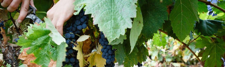 denominacion vino rioja