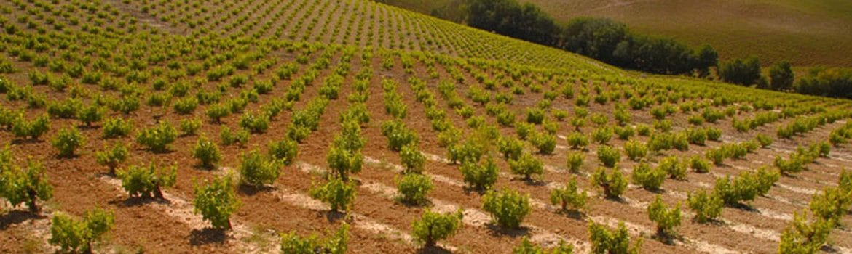 Denominacion Vino Montilla Moriles