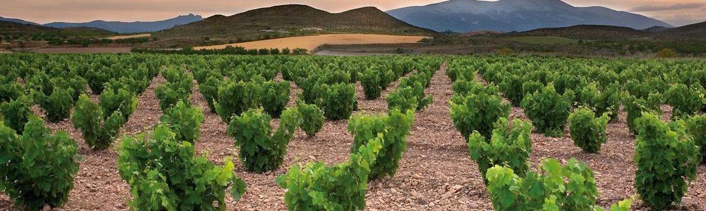 Denominación vinos campo de borja