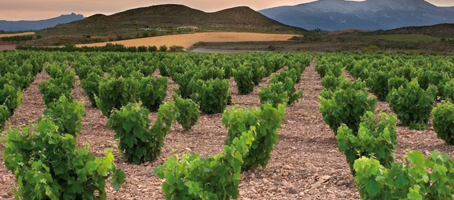 Vinos Campo de Borja