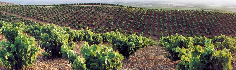 Denominación vino Cariñena