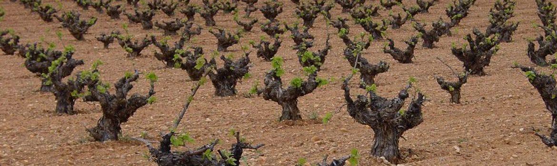 Denominación vino Cigales