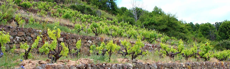 Denominación Vinos Sierra de Salamanca