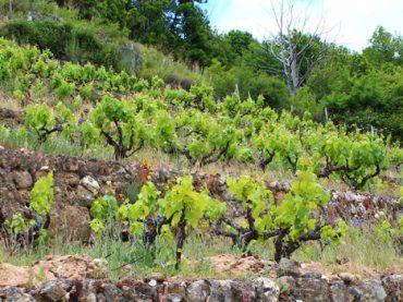 Vinos Sierra de Salamanca