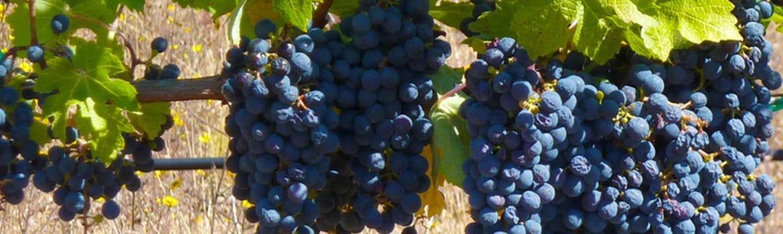 Denominación Vinos Ribera del Júcar