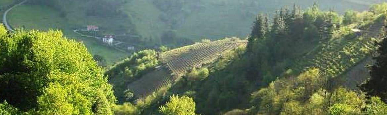 Denominacion vino de Cangas