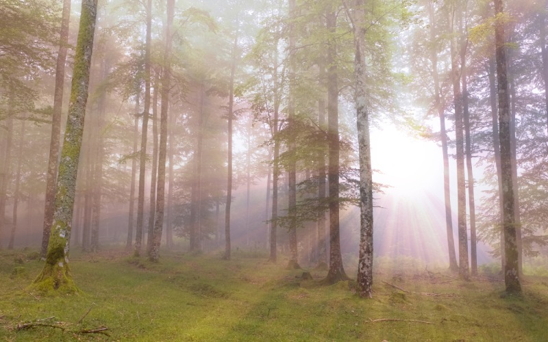 Rayos de sol traspasando la niebla que fluye entre los árboles en el Parque natural de Aralar