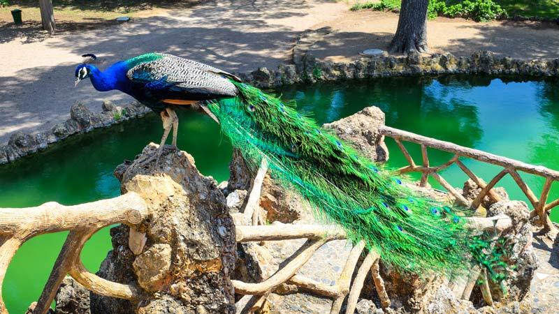 Parque Samá de Cambrills
