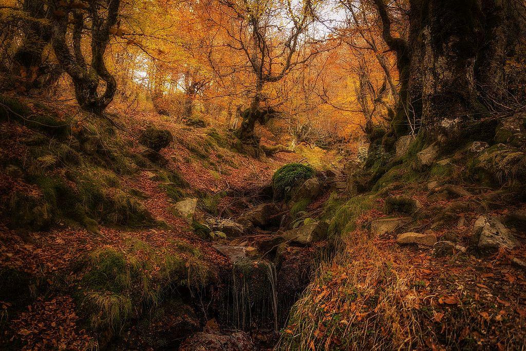 Uno de los hayedos de España que ver en otoño es el hayedo de Pedrosa
