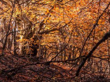 Los 11 espacios naturales más espectaculares de Segovia