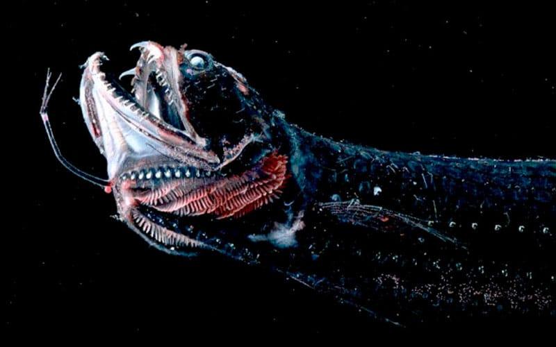 peces más raros del mundo