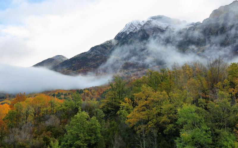 Uno de los bosques que rodean el embalse de Búbal
