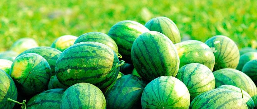 alimentos temporada agosto sandias