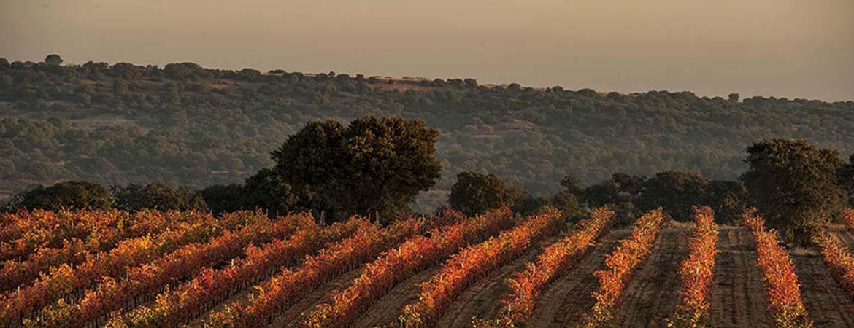 Tierra del Vino