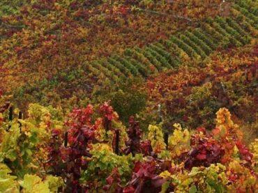 Vinos Ribeira Sacra