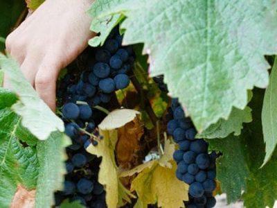 Vino Rioja en La Rioja