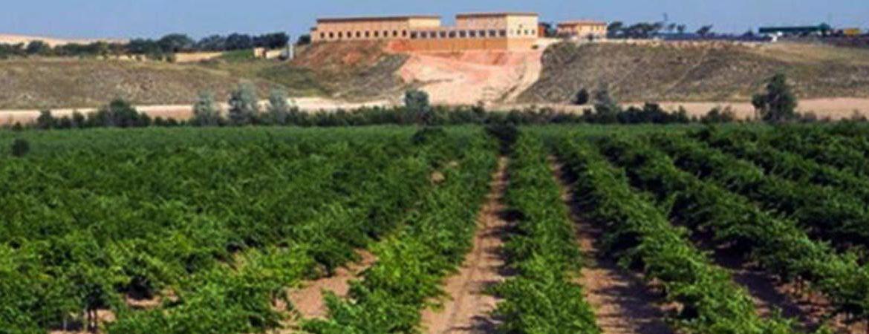 Vino Taraconte-Acentejo