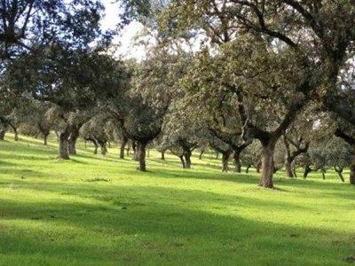 Parque Natural de la Sierra de Cardeña y Montoro