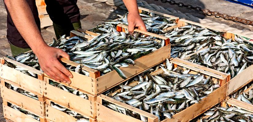 reservas sardinas