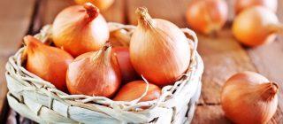 gastronomia propiedades cebolla