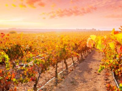 Ruta por 5 bodegas D.O.C. Rioja