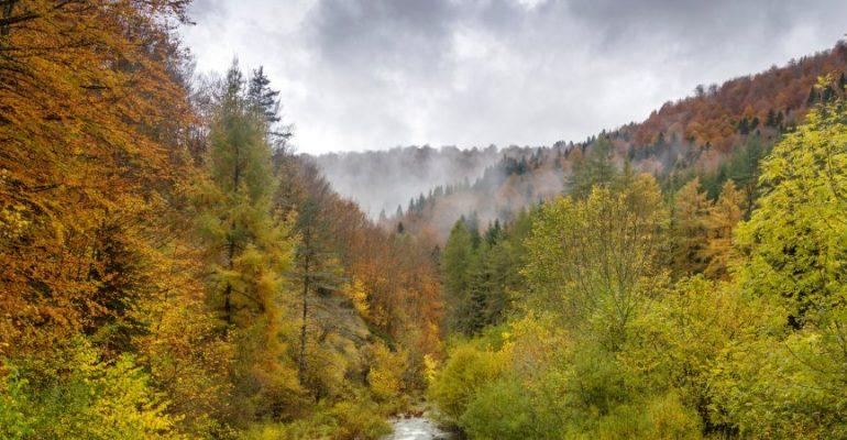 7 grandes bosques de España, tesoros naturales