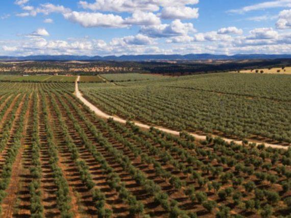 Finca Capilla del Fraile: tradición, autenticidad y calidad