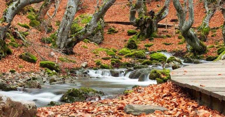 Faedo de Ciñera, el bosque de leyendas de León