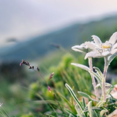 La estrella que quiso ser flor y otras historias | Leyendas de los Pirineos 5