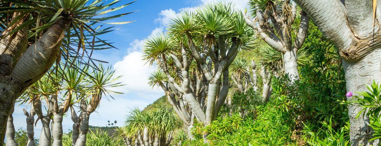 El Jardín de las Hespérides y las Islas Canarias