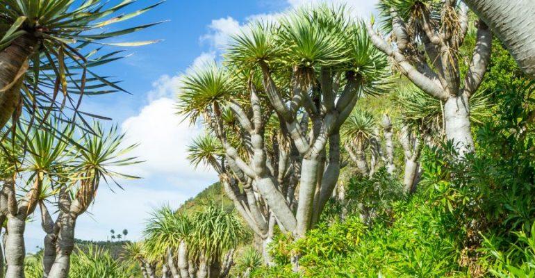 El Jardín de las Hespérides, el paraíso griego localizado en Canarias