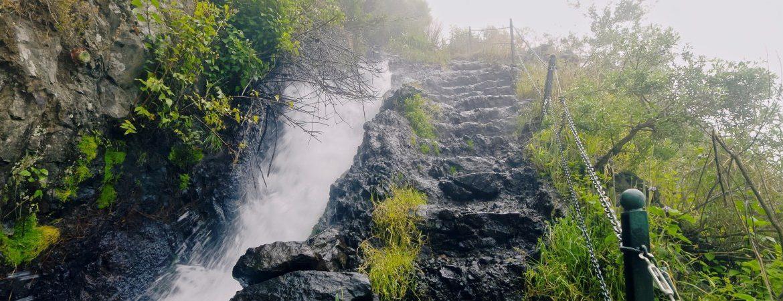 Vegetación en la cascada de Los Tilos